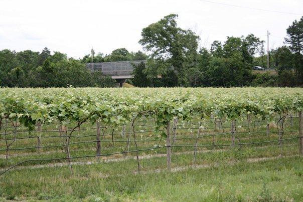 Variety winery in Hammonton, NJ