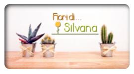 vendita_piante_grasse