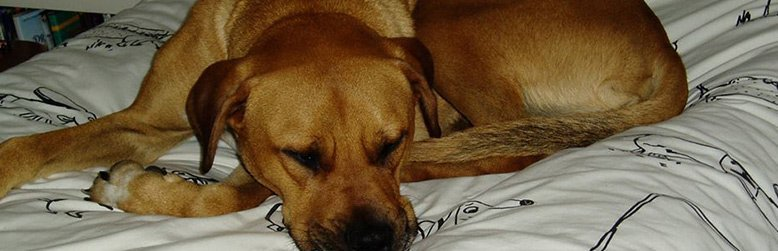 seymour central vets dog sleeping in bed
