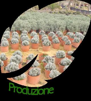produzione piante mediterranee