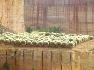 produzione piante grasse