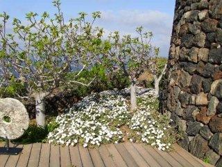 allestimento giardini con piante del mediterraneo