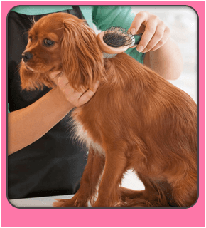 Services for A bath and a biscuit grooming salon