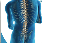 Rieducazione posturale colonna