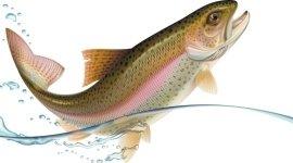 ittico, centro ittico, itticoltura