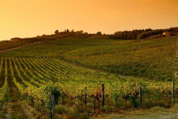Tramonto Chianti Vineyard