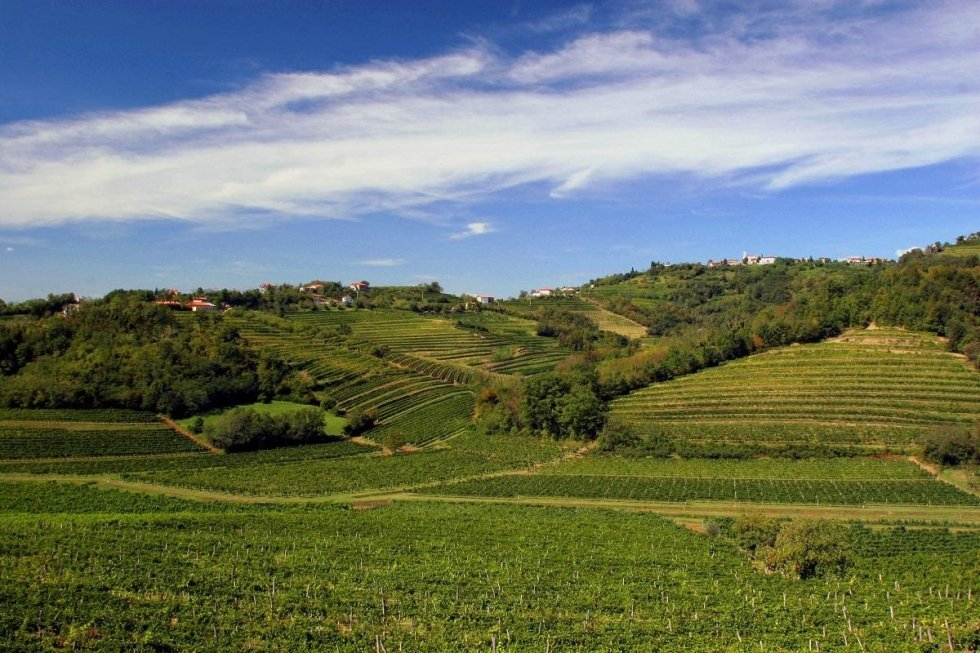 Friuli Vineyards