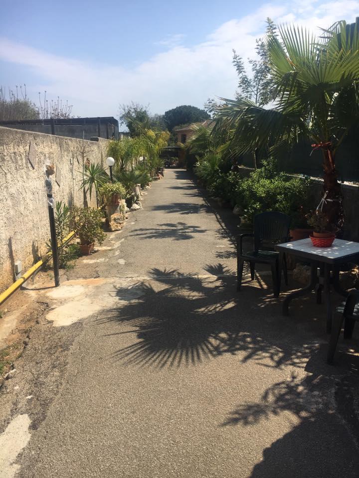 Un viale con palme e piante fiorite