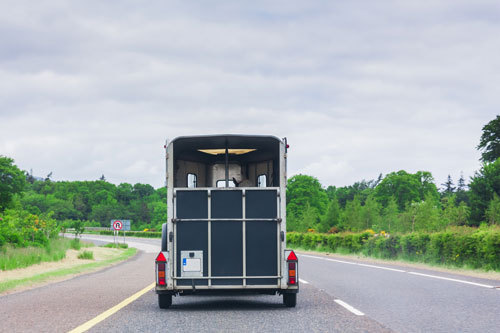 Roadking horse trailer