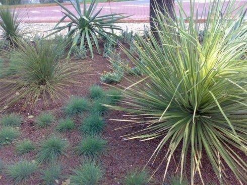 Combinazione di piante verdi circa un albero
