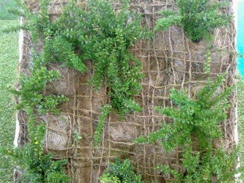 Primo piano di un progetto di muro verticale di felci