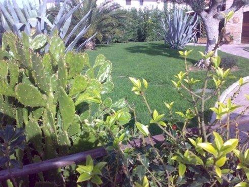 Vista di un verde giardino che è stata decorato con aloe e cactus