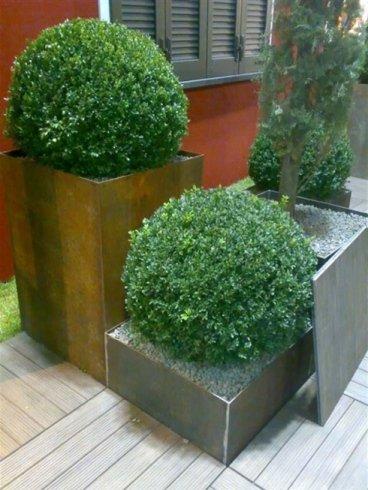 Grandi vasi di pietra con arbusti