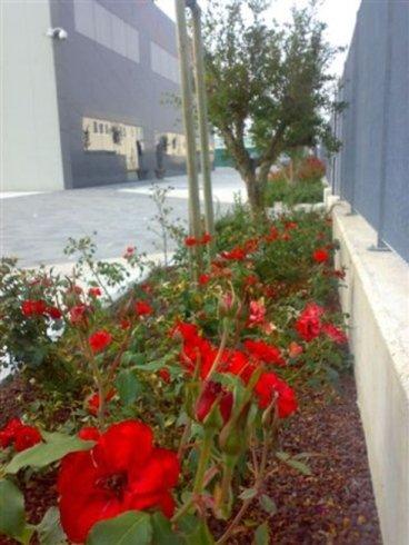 Fiori rosse decorando il laterale del paseo