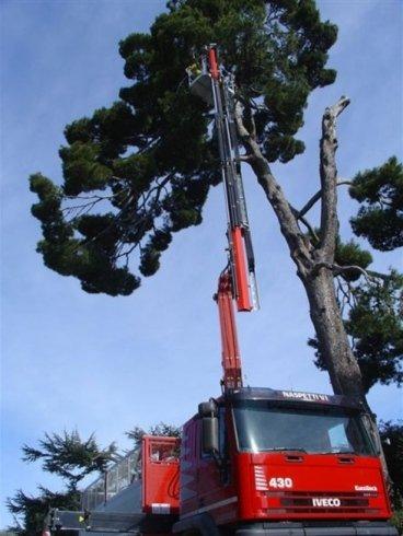 Operatore salito a una grua avendo cura di un albero