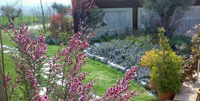Giardino con fiori magenta in primo piano