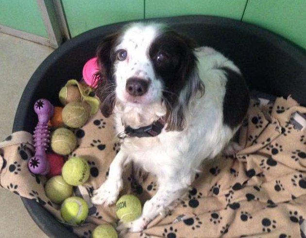 Dog Kennels Wythall Birmingham