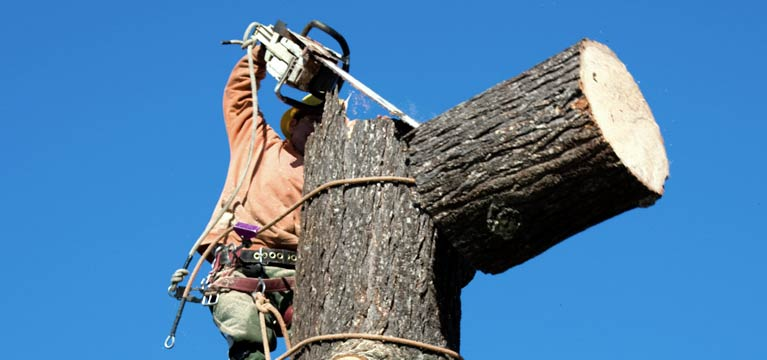 Machines being used for tree lopping in Benleigh