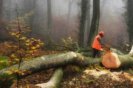 Man sawing a tree