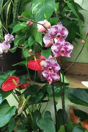 Delle orchidee