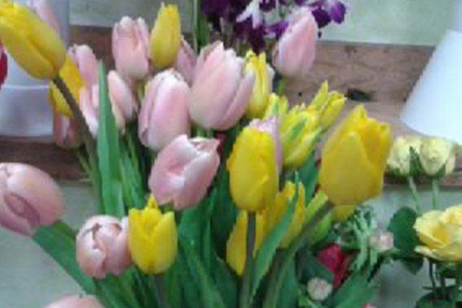 Un mazzo di tulipani