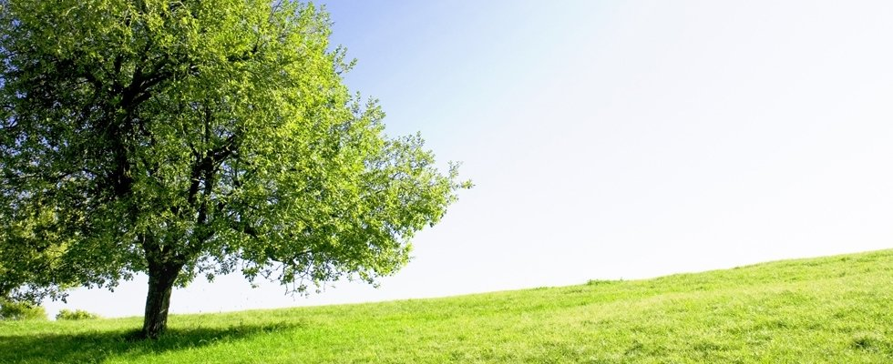 bosco spurghi di Giacomasso Renzo