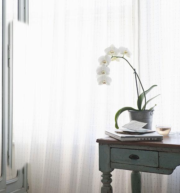 Tavola antica di legno, vaso con orchidea bianca