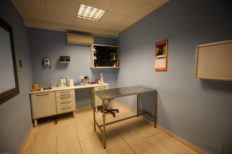 veterinario grosseto