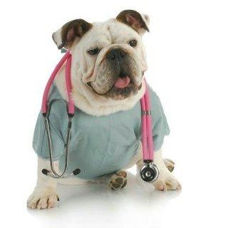Visite veterinarie su appuntamento Grosseto
