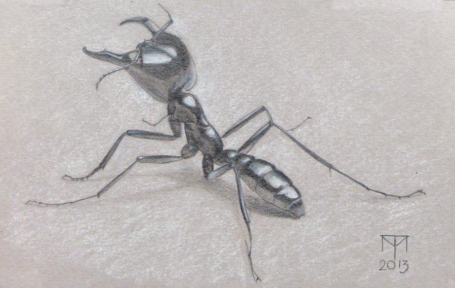 insect art, insect drawing, pencil drawing, pastel drawing