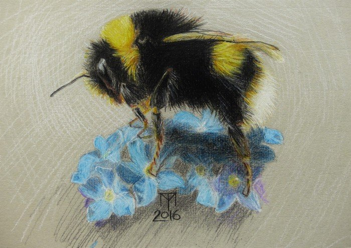 insect drawing, bumble bee drawing, bumble bee
