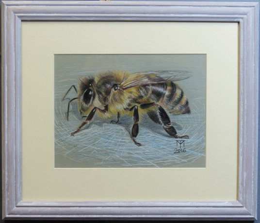 honey bee, honey bee drawing, insect drawing