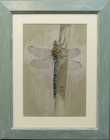 dragonfly drawing, insect drawing, emperor dragonfly