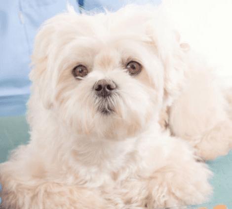 un cagnolino