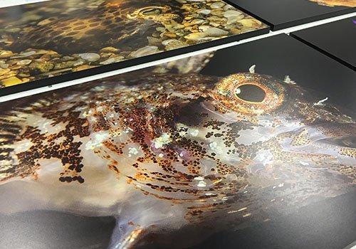 dei poster di alcuni pesci