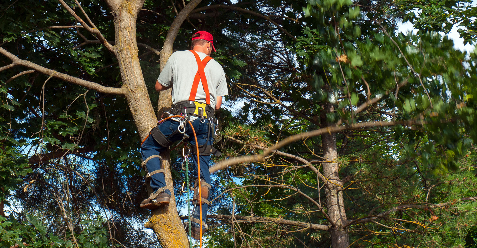 Comprehensive tree service being done by experts in Manitowish Waters, WI