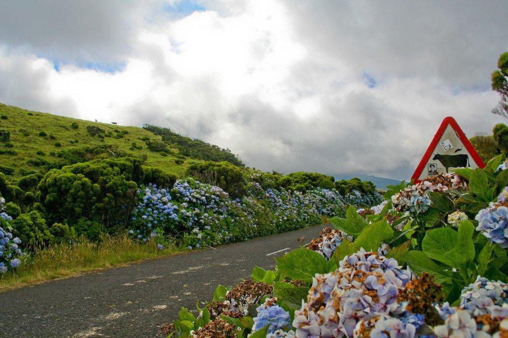 Azores bike tour road