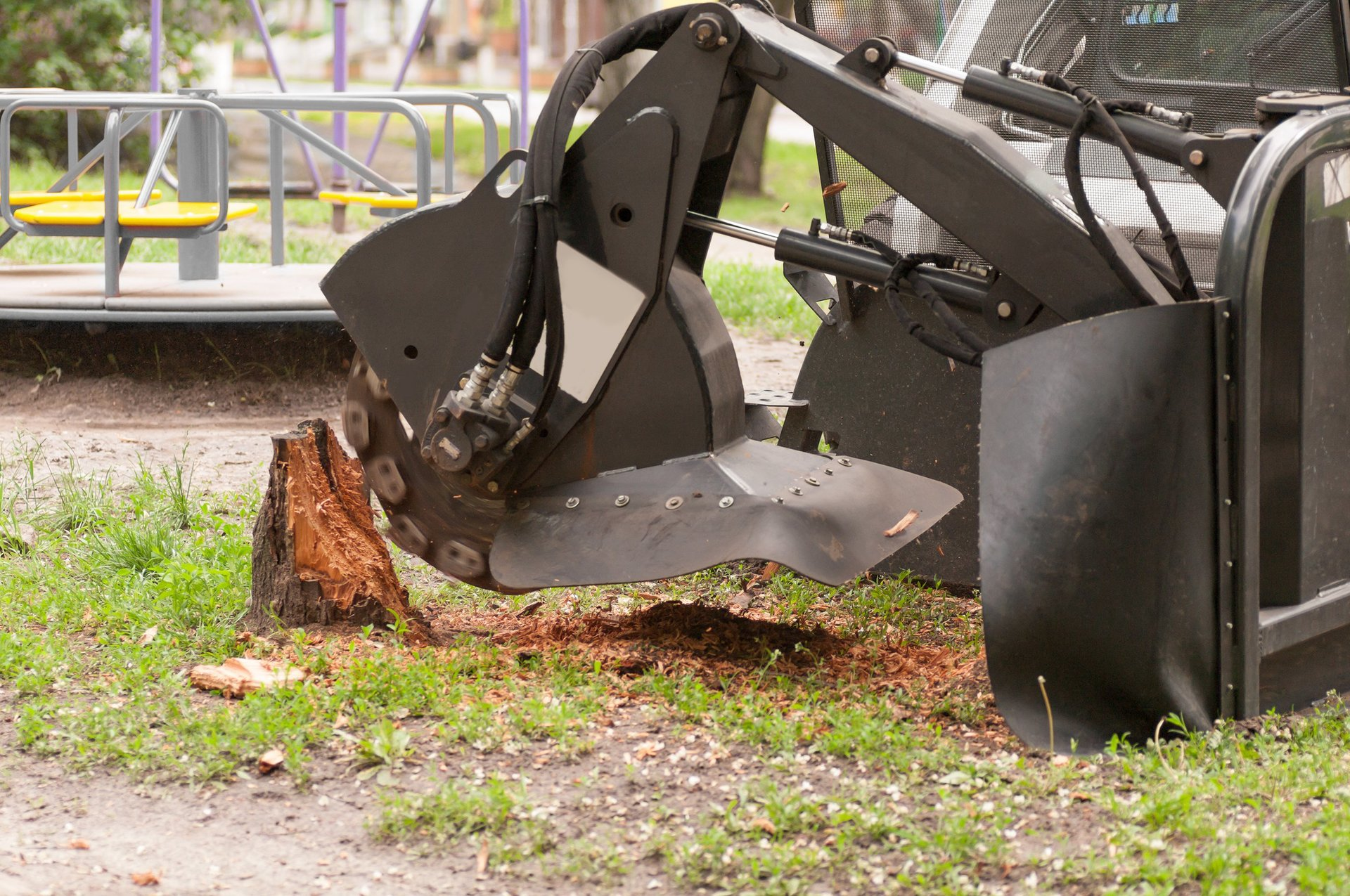 How Much Does It Cost To Get A Tree Removed