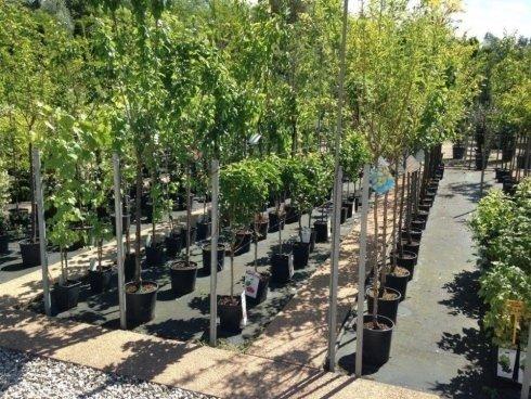 Alberi da frutto,alberi da giardino