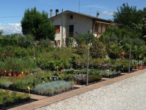 Esposizione, piante aromatiche, piante da fiori,vivaio