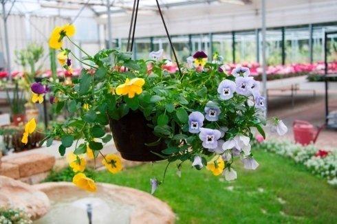 fiori sospesi