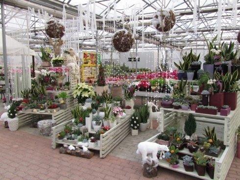 decorazioni con piante