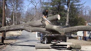 Deadwood removal
