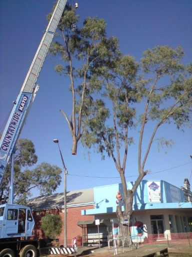 large branch getting lifted away by a blue crane