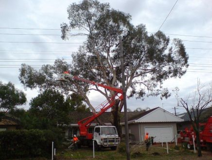 white truck with red lifter to get worker to the top of tree branches