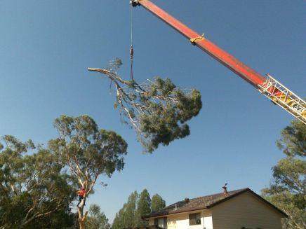 orange crane lifting a large tree branch