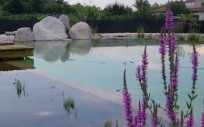 Piante acquatiche per pulizia piscina