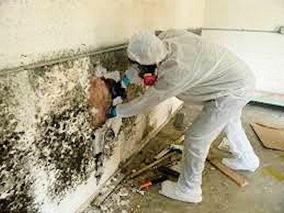 Mold-removal-st-louis