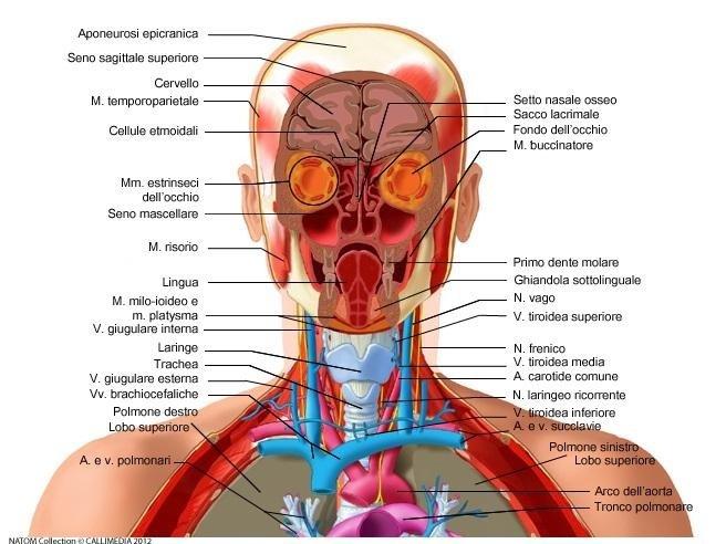 diagnosi e cura malattie orecchie