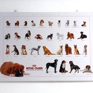 Veterinari per cani, veterinario per cani, Tuscania, Viterbo
